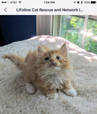 baby lion cat